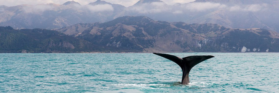 Sample Itinerary – Relax and enjoy the ride in New Zealand